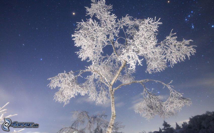 zamarznięte drzewo, gwiaździste niebo
