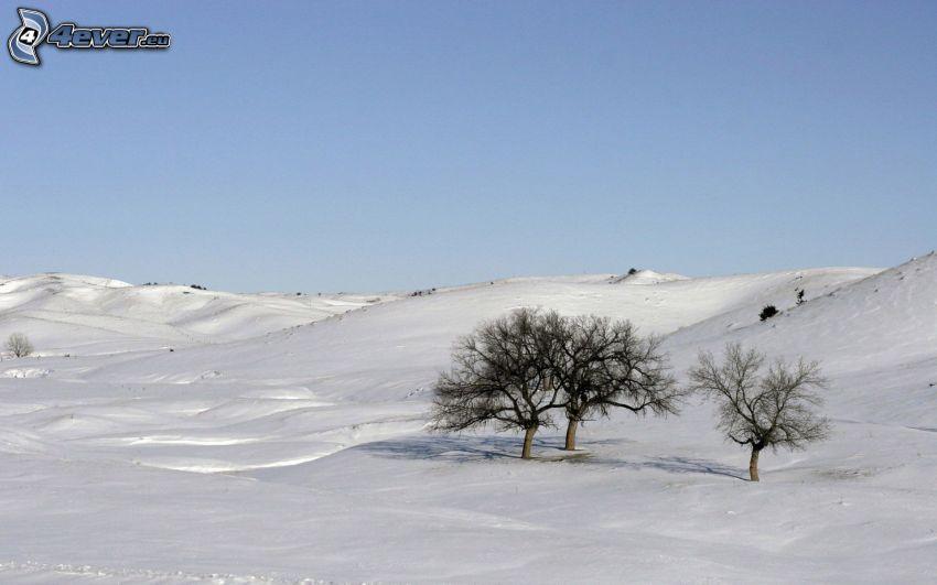 zaśnieżona łąka, drzewa