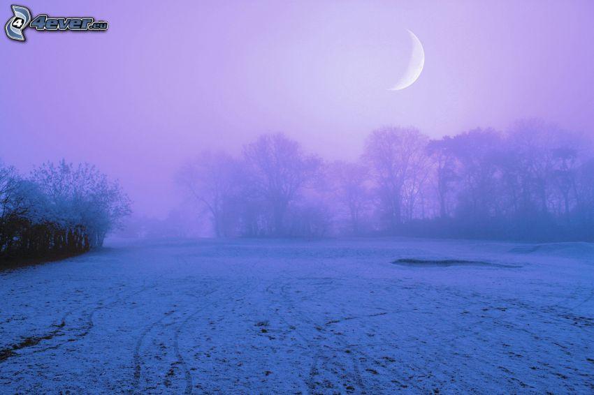 zaśnieżona łąka, mgła, drzewa, księżyc