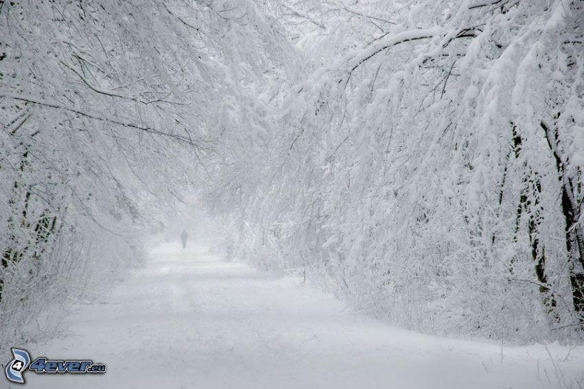 zaśnieżony las, człowiek