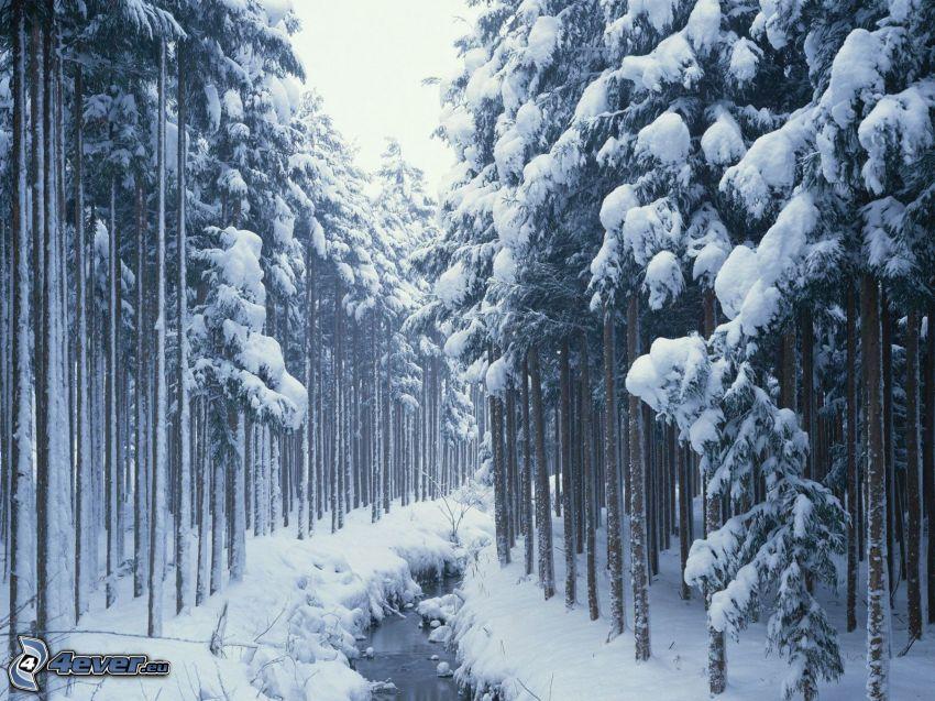 zaśnieżony las, leśny strumyk