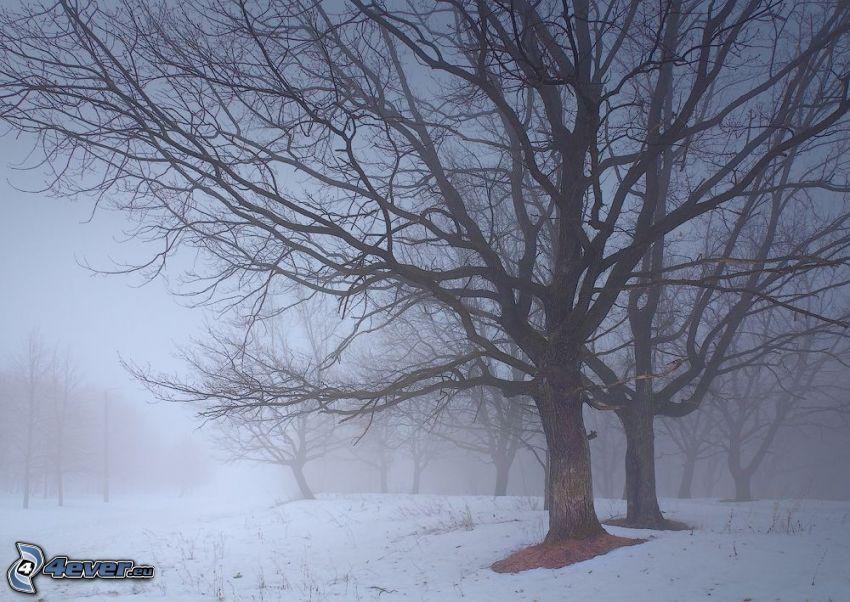 zaśnieżony las, mgła w lesie