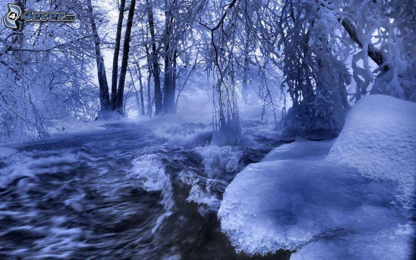 zaśnieżony las, strumyk w lesie