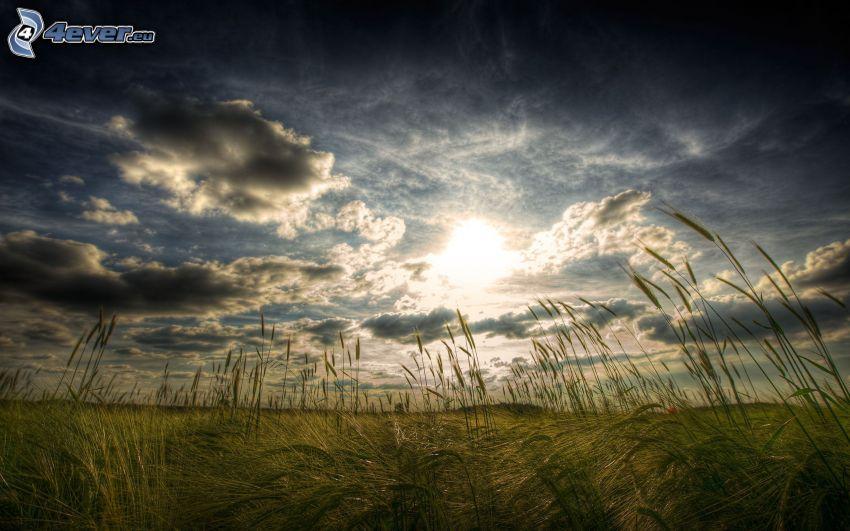 źdźbła trawy o zachodzie słońca, pole, słońce za chmurami
