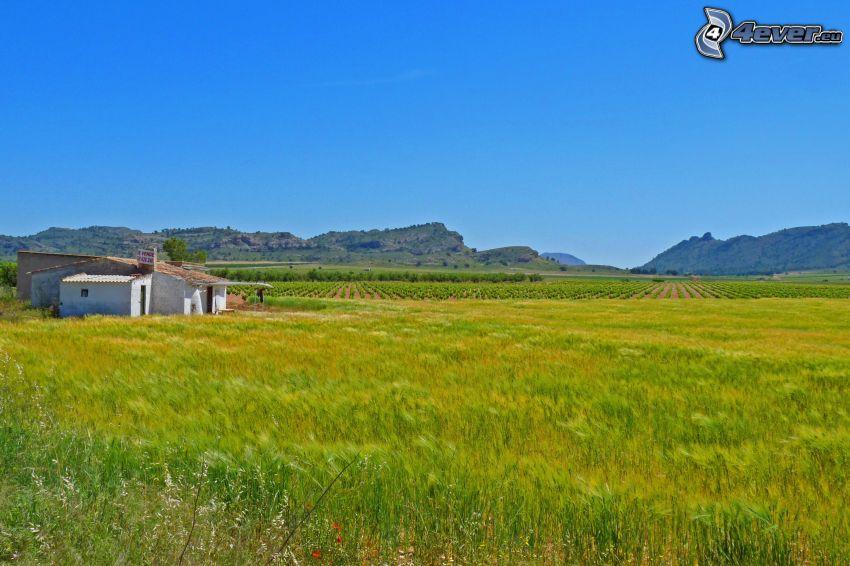 zielone zbożowe pole, pola, pasmo górskie, stary dom