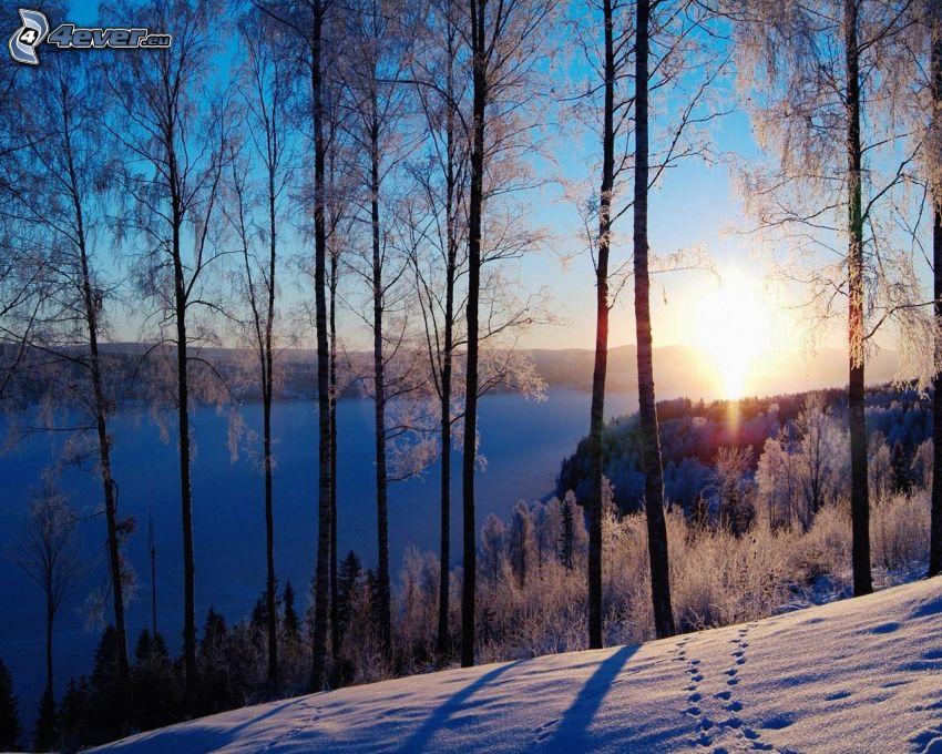 zimowy zachód słońca, zaśnieżony las, ślady w śniegu