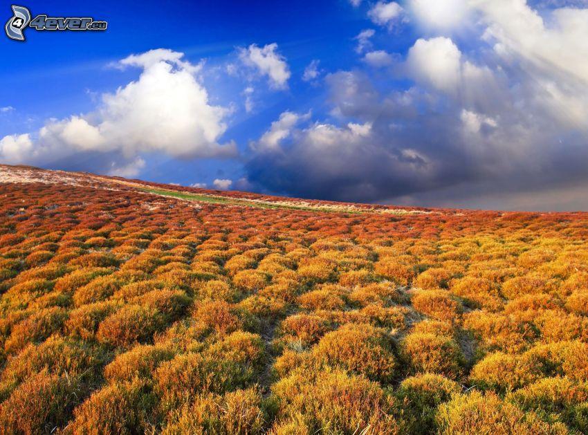 żółta trawa, chmury
