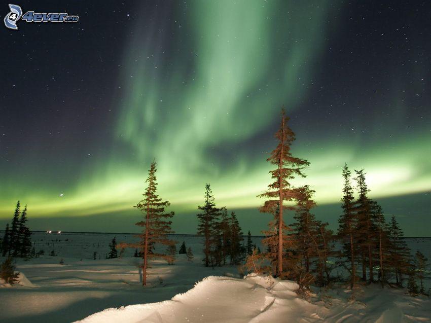 zorza polarna, drzewa, śnieg