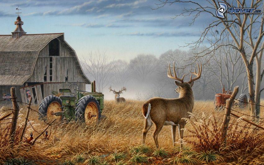 amerykańska farma, opuszczony dom, jelenie, ciągnik, drzewa