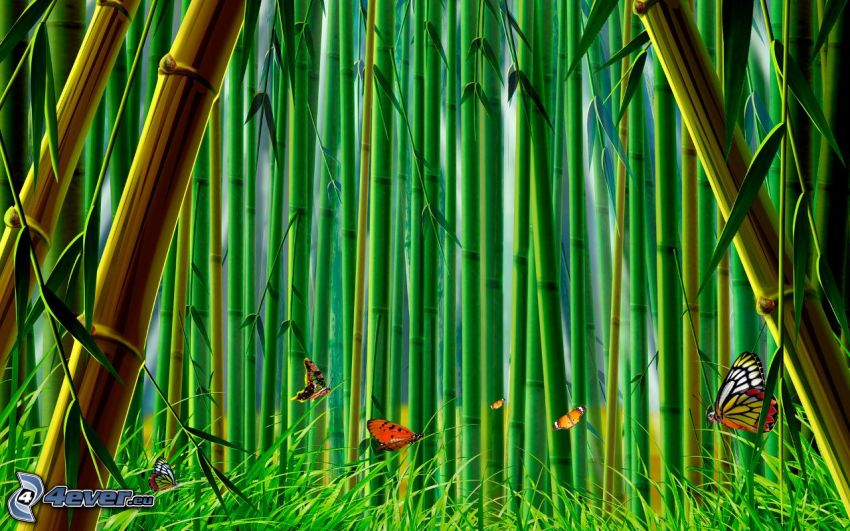 bambusowy las, Motyle
