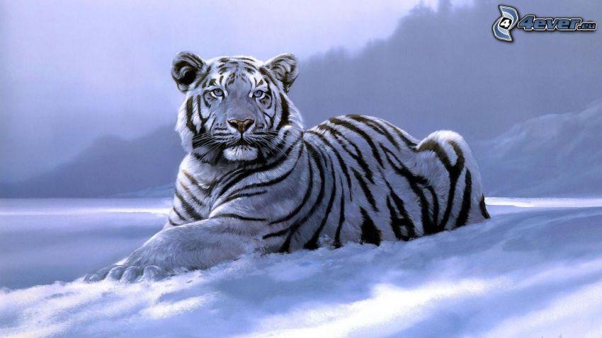 biały tygrys, śnieg