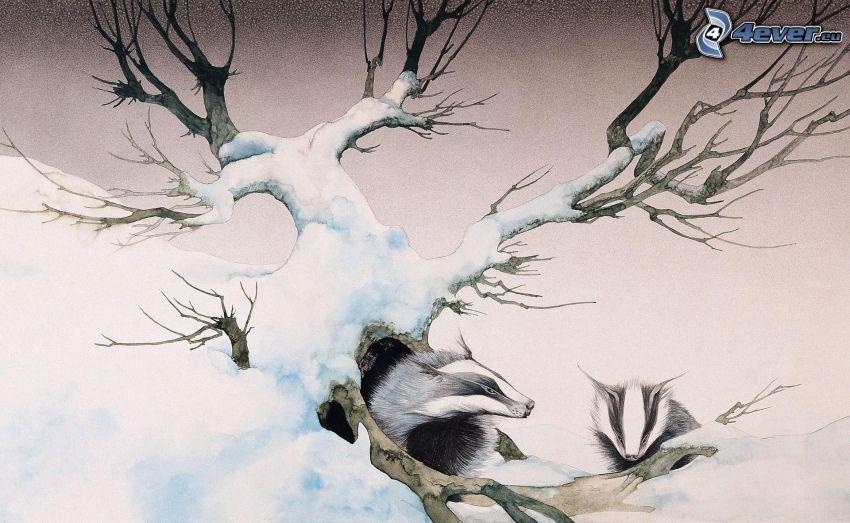 borsuki, drzewo, śnieg