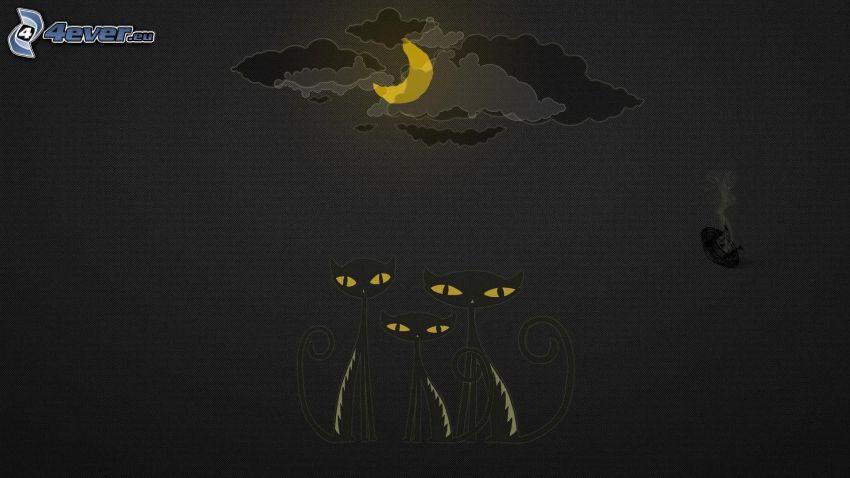 czarne koty, księżyc, noc