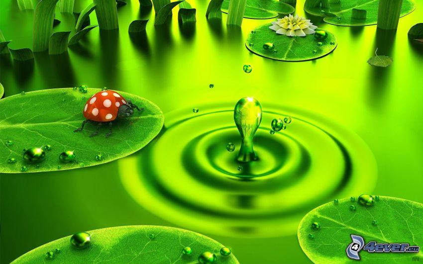 biedronka na liściu, krople, zielony