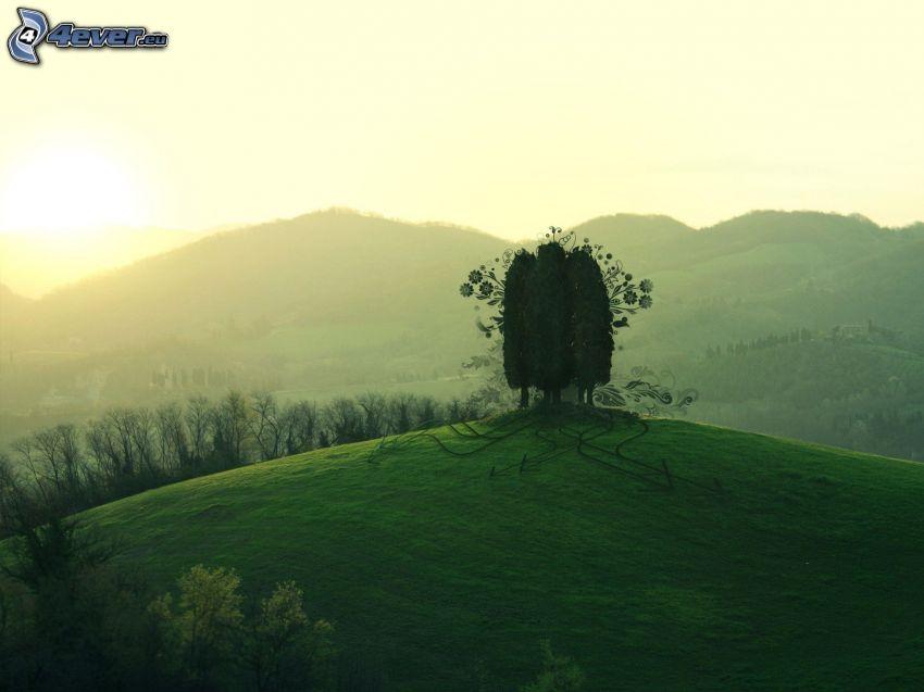 drzewa, wzgórza, zachód słońca