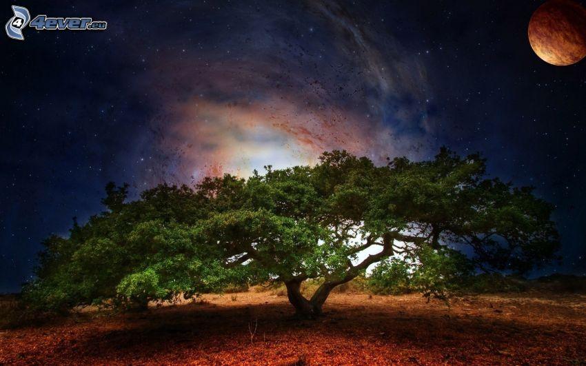 drzewo, galaktyka, planeta