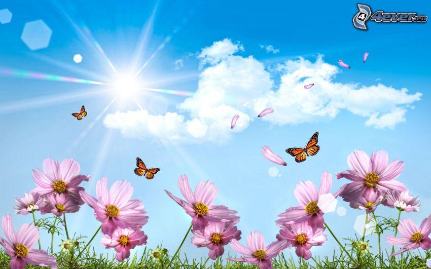 fioletowe kwiaty, Motyle, słońce, chmury