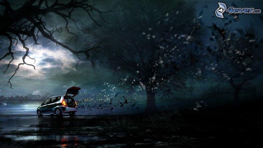 Honda, nietoperze, wieczór, drzewa