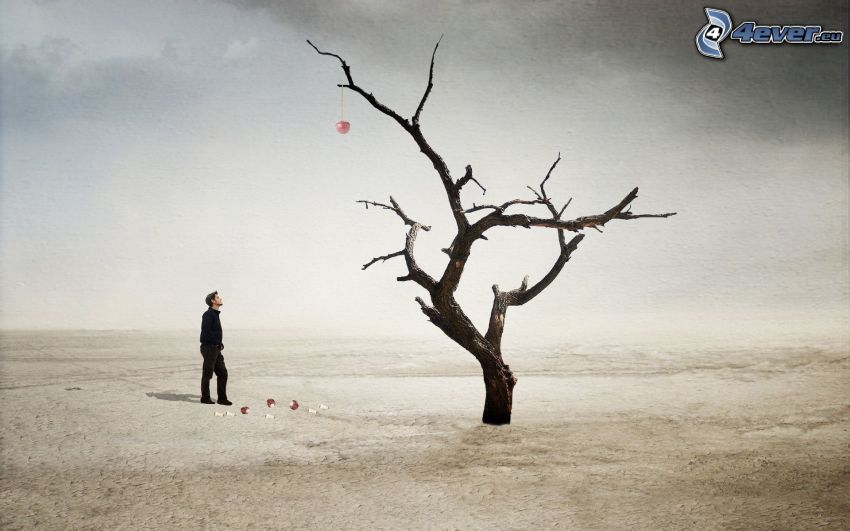 mężczyzna, suche drzewo, pustynia, jabłko