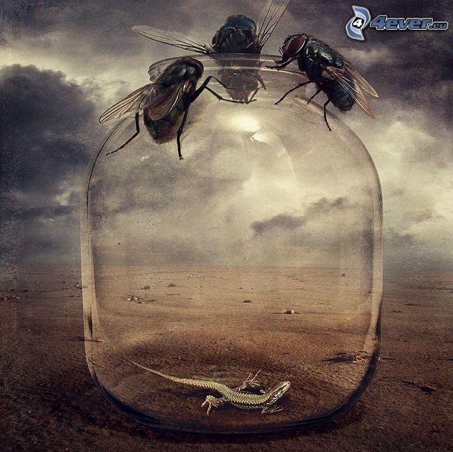 muchy, szklanka, jaszczur, ziemia, chmury