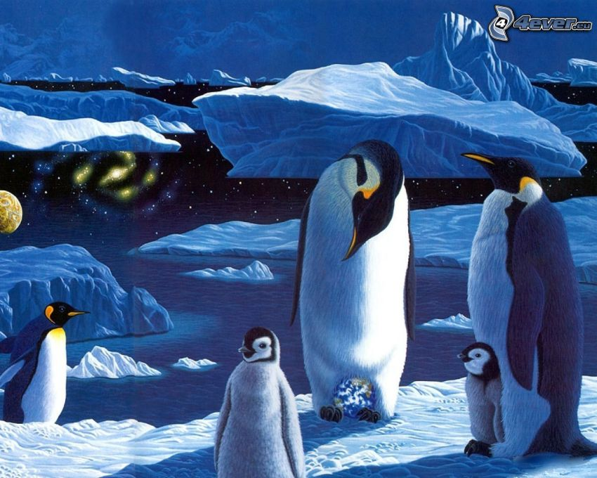 pingwiny, morze, lodowce
