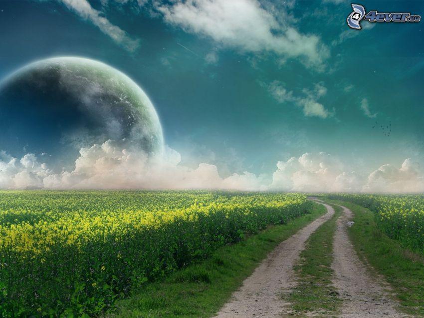 polna droga, rzepak, księżyc, chmury
