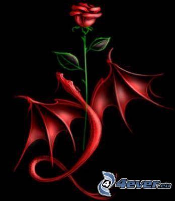 róża, czerwony smok