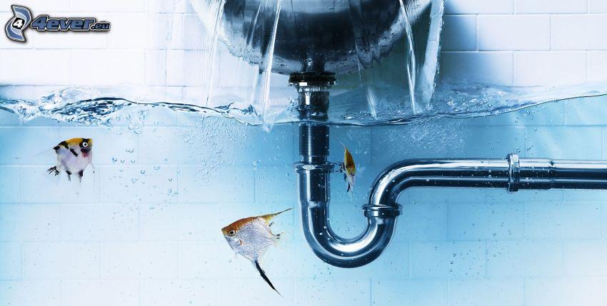 rury, rybki, woda