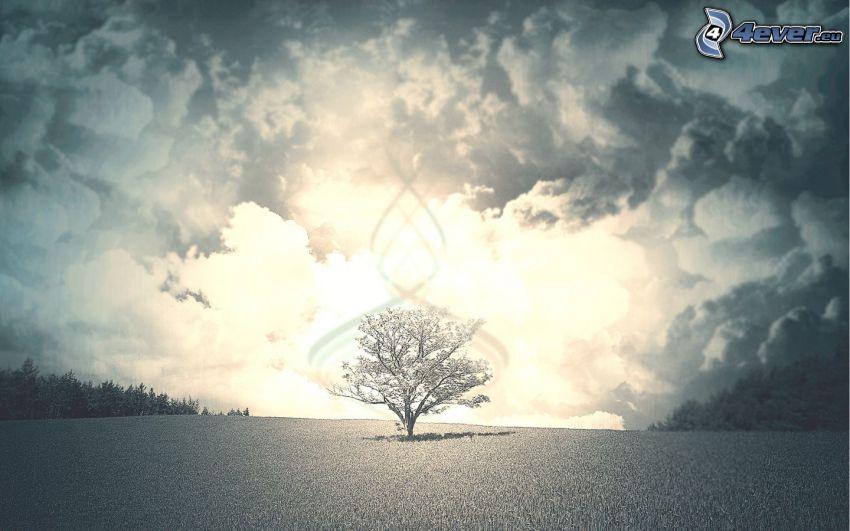 samotne drzewo, łąka, chmury, poświata