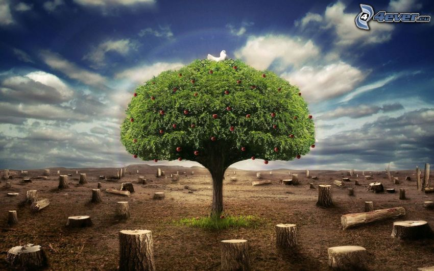 samotne drzewo, pniaki, chmury
