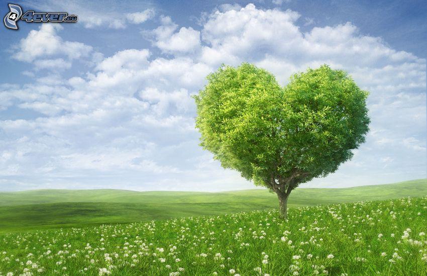 samotne drzewo, serduszko, zielona łąka
