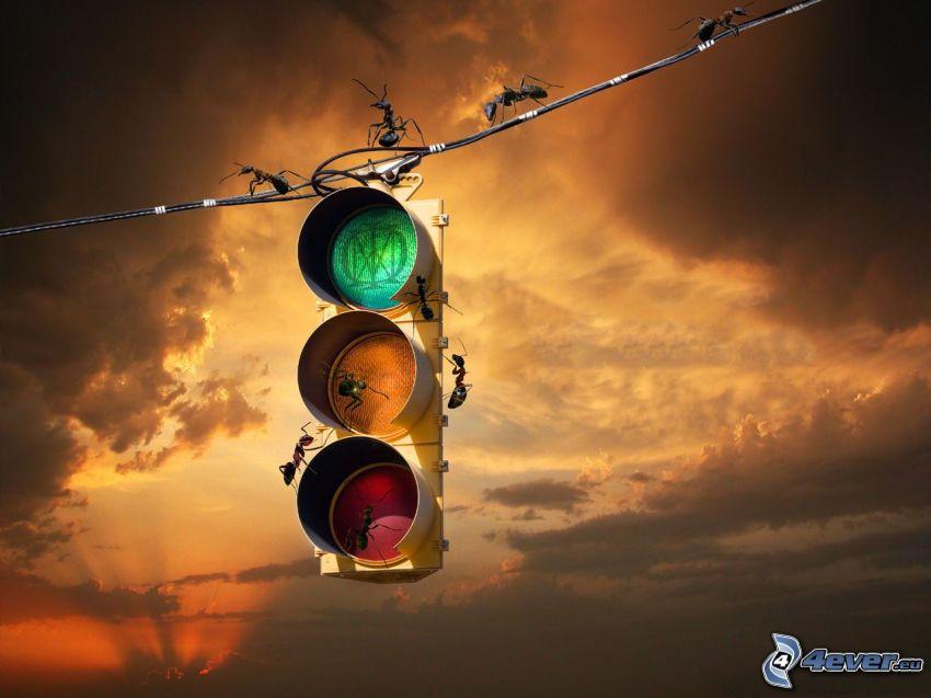 semafor, mrówki, chmury