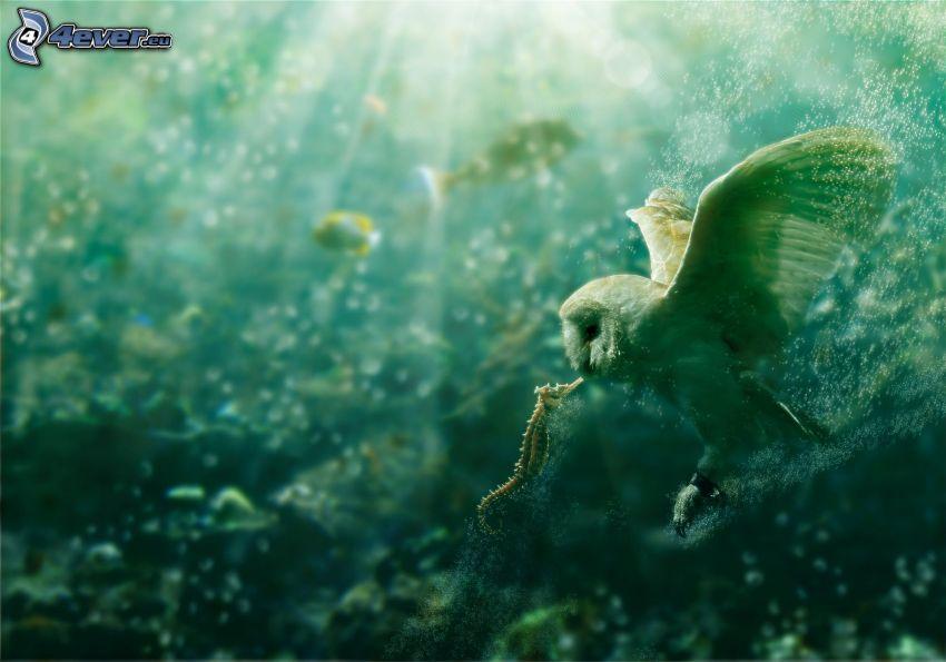 sowa, skrzydła, konik morski, pocałunek