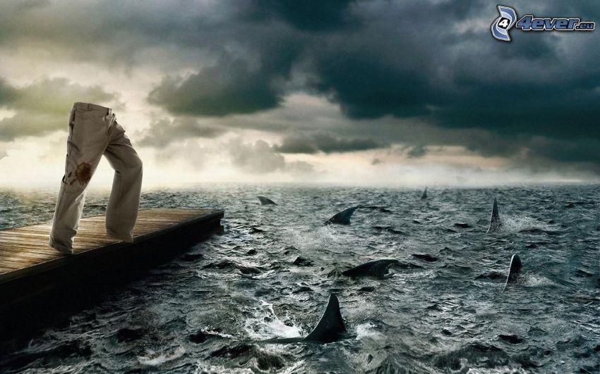 spodnie, morze, rekiny, drewniane molo, chmury