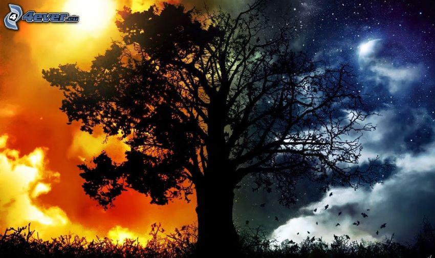 sylwetka drzewa, dzień i noc