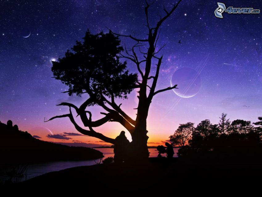 sylwetka drzewa, niebo w nocy, księżyc, gwiazdy, sylwetki