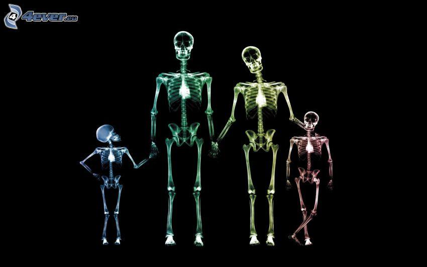 szkielety, rodzina