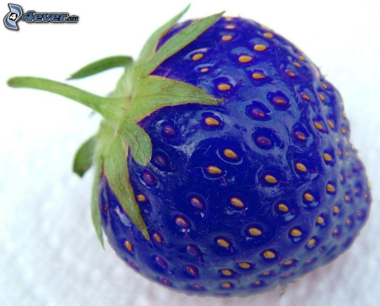 truskawka, niebieski