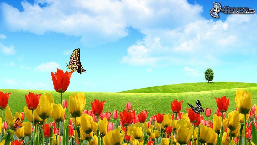 tulipany, Motyle, pole, samotne drzewo