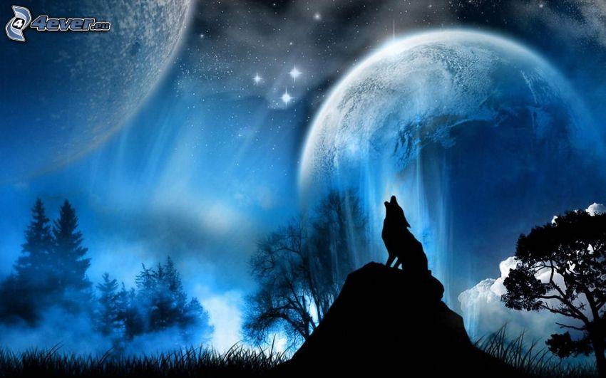 wyjący wilk, sylwetka wilka, księżyc