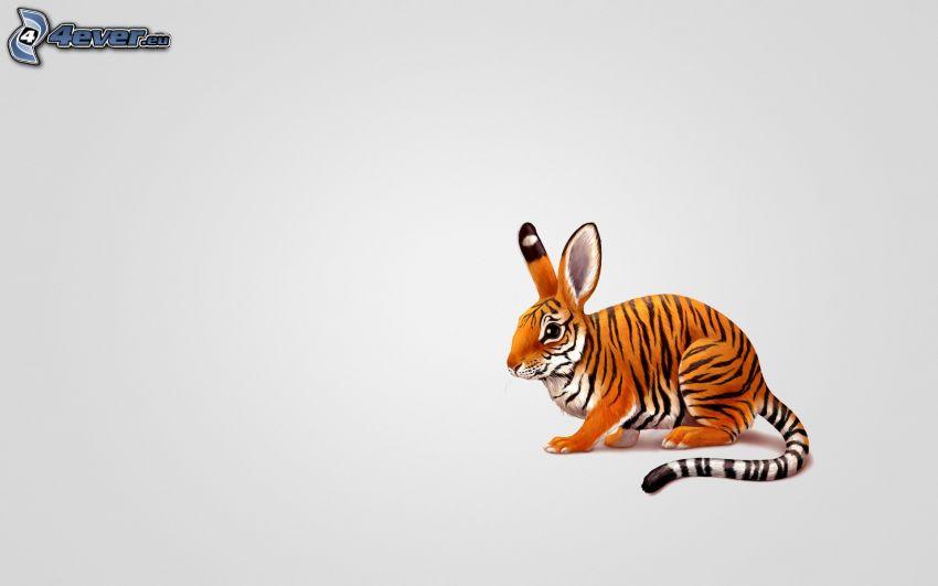 zając, tygrys