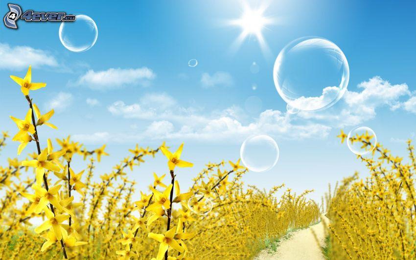 złoty deszcz, bańki, polna droga