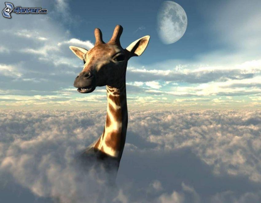 żyrafa, głowa, chmury, księżyc