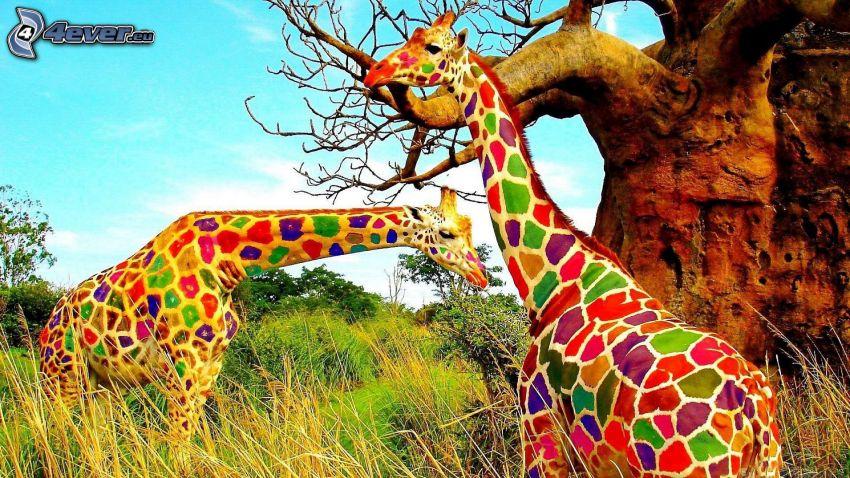 Żyrafy, kolory tęczy, wysoka trawa