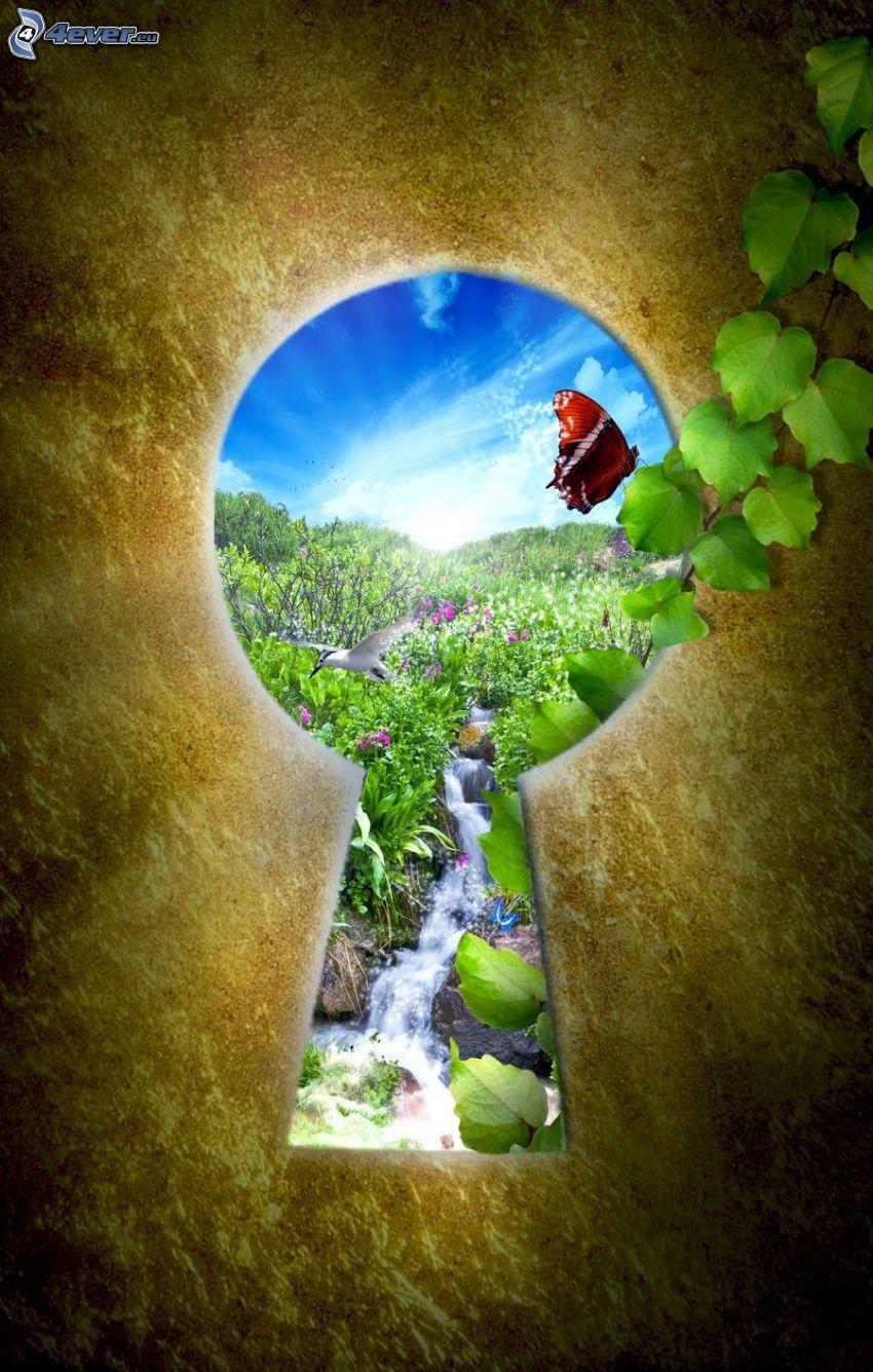 dziurka od klucza, łąka, motyl, gołąb, potoczek, zielone liście