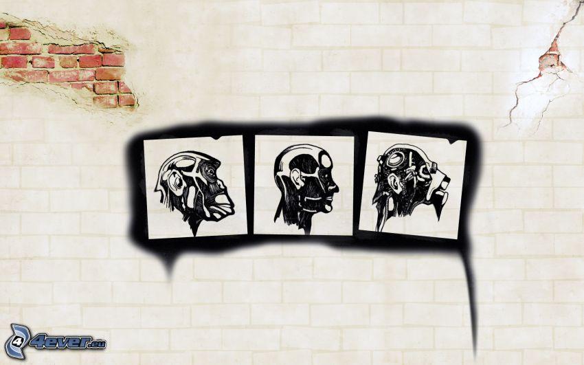 ewolucja, obrazy, człowiek, małpa, robot