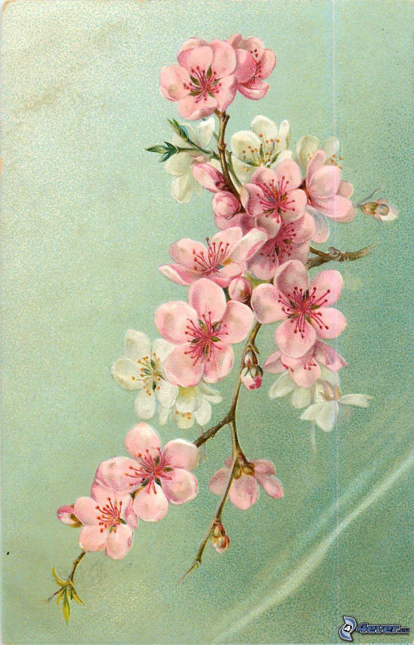 kwitnące gałązki, różowe kwiaty