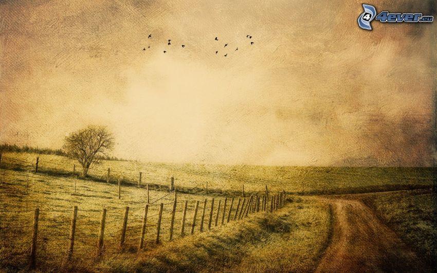 łąka, ogrodzenie z drutu, polna droga, obraz