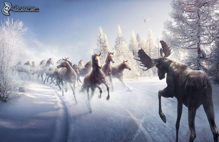 łoś, stado koni, śnieżny krajobraz