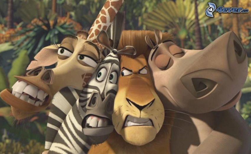 Madagaskar, żyrafa z Madagaskaru, zebra z Madagaskaru, lew, hipopotam